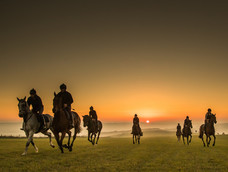 19. Early morning on the gallops